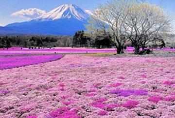 Những Câu Hỏi Thường Gặp Khi Xin Visa Nhật Bản