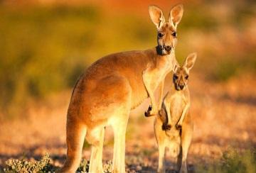 Không có nghề nghiệp, xin visa du lịch Úc được không?