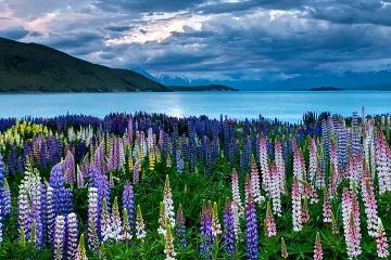 Q&A ABOUT PROCEDURE OF NEW ZEALAND TOURIST VISA AT VFS IN VIETNAM 2020